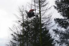 Bomenkap-boulepark-EWPC-007