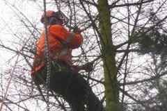 Bomenkap-boulepark-EWPC-008