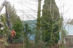 Bomenkap-boulepark-EWPC-015