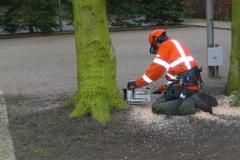 Bomenkap-boulepark-EWPC-017