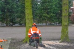 Bomenkap-boulepark-EWPC-018