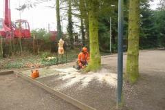 Bomenkap-boulepark-EWPC-019