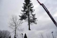 Bomenkap-boulepark-EWPC-020