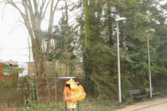 Bomenkap-boulepark-EWPC-025