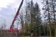 bomen-rooien-e.w.p.c.-022