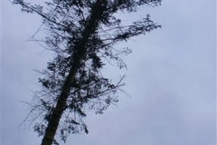 bomen-rooien-e.w.p.c.-028